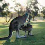 ワーホリ・語学留学におすすめ!評判のオーストラリア留学エージェント9選