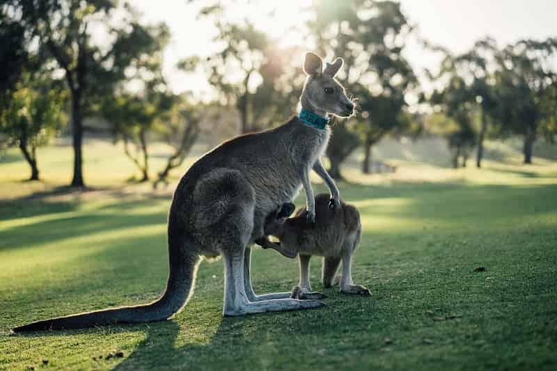 おすすめのオーストラリア留学エージェント比較