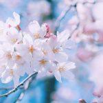 【横浜】大学受験の合格実績で評判のおすすめ英語塾6選|塾選びのコツ
